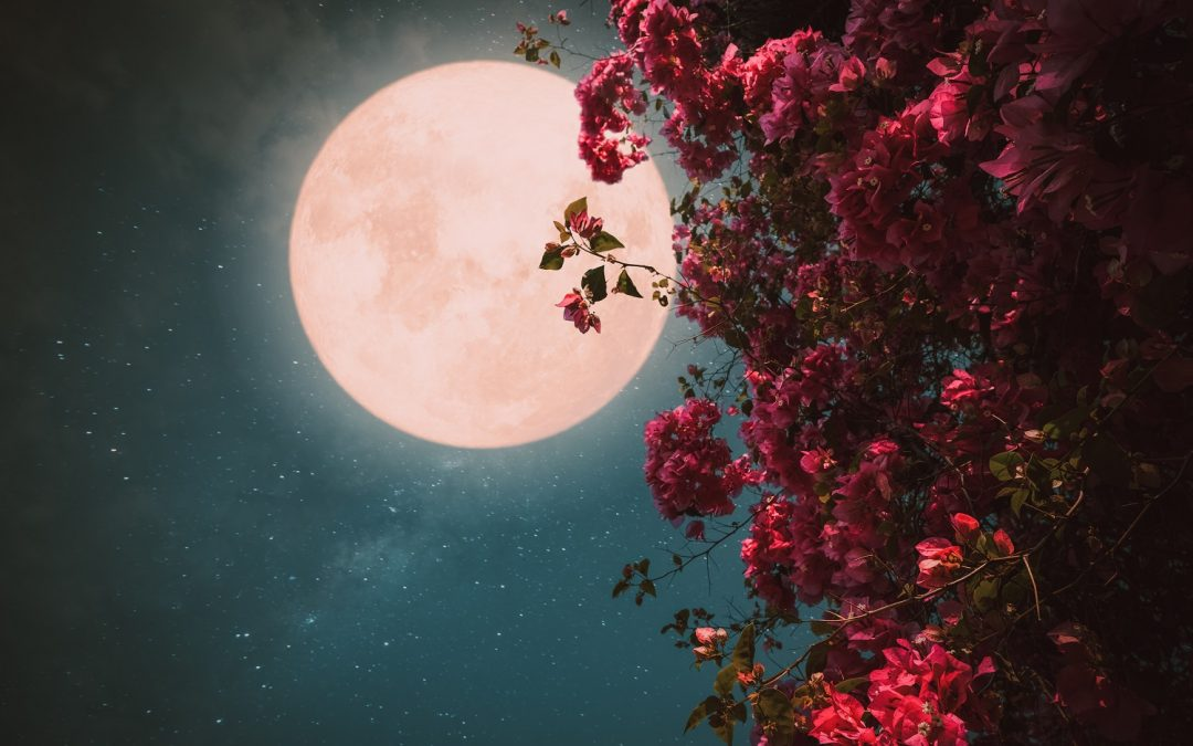 A Rose-Colored Moon